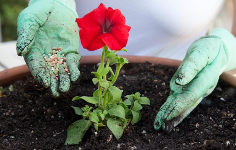 Ähnlich wie beim Blumen gießen gibt es auch für das Düngen von Blumen den richtigen oder falschen Zeitpunkt. Hier sollte je nach Art der Pflanze und des Düngemittels genau auf der Packung nachgelesen werden, was am Besten ist. (#5)