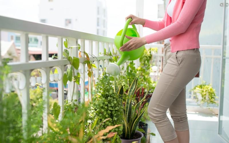 Kübelpflanzen brauchen im Hochsommer und bei starker Hitze eine besondere Pflege. Ihnen hilft es, wenn man sie morgens gießt und am späten Abend, wenn die Sonne untergegangen ist ein zweites Mal. Im Zweifel zeigt der Finger-Test, und die trockene Erde, ob die Blume noch zusätzliches Wasser benötigt. (#3)