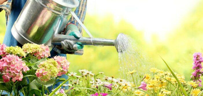 Blumen gießen: Wieviel ist optimal?