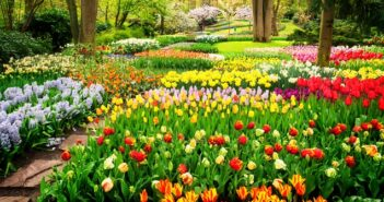 6 aussergewoehnliche rote Blumen