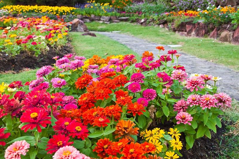 Blumen bunt zusammenzumischen, kann schnell zu aufdringlich werden. Dann lieber (wie hier) mit Rasen oder Wiese unterbrechen. (#06)