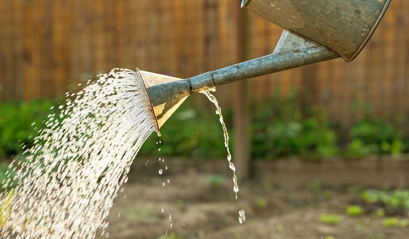 Mit einer Gießkanne mehrmals täglich vorsichtig dosiert die Nester wässern – ohne die Tiere zu ertränken.