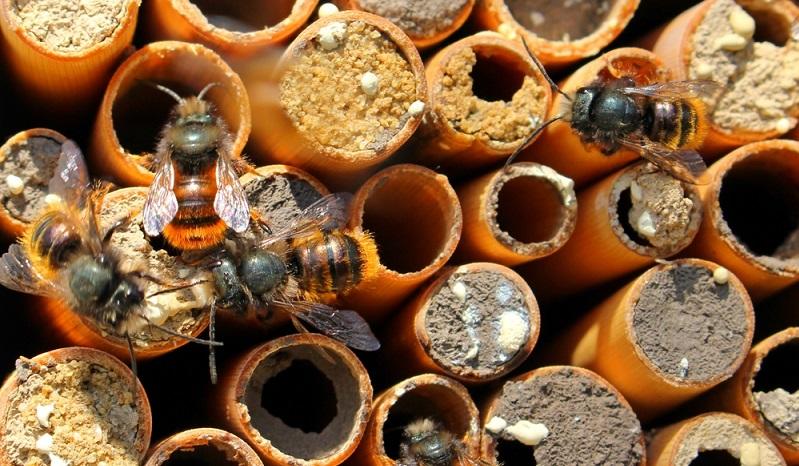 So kann ein Wildbienen-Hotel aussehen um die Wildbienen umzusiedeln.