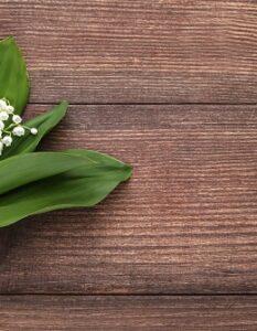 Maiglöckchen: Pflanzen, pflegen & Standort