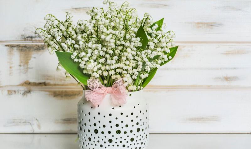 Maiglöckchen können im Frühjahr als Pflanze gekauft werden oder vielleicht gibt es auch einen Nachbar, der von seinem Bestand gerne einige verschenkt.