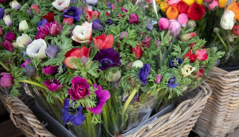 Anemonen aus Knollen bilden an der Hauptzwiebel Nebenknollen. Diese können abgetrennt und eingepflanzt werden.