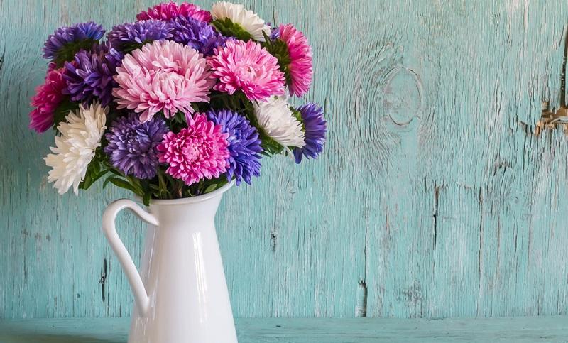 Die Aster, auch Sternblume genannt, gehört zur Gattung der Korbblütler und umfasst rund 180 Arten.