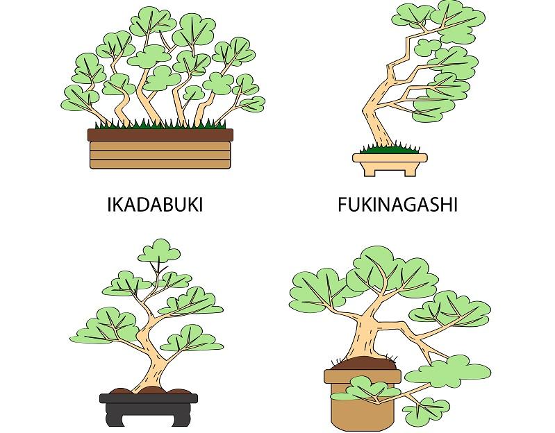 Diese Grafik zeigt vier Gestaltungs-Arten der Bonsai Pflege.