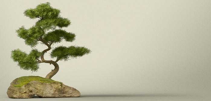 Bonsai: Pflege & schneiden für Anfänger