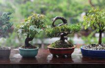Bonsai richtig schneiden: In 5 Schritten zum Minibaum
