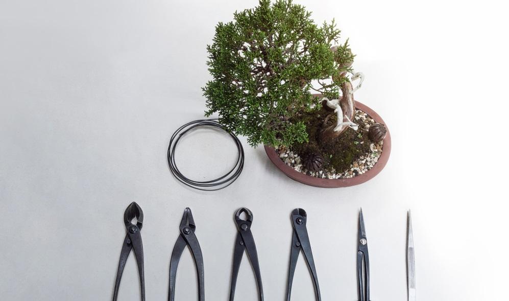 Diese Werkzeuge sollte man im Repertoire haben, damit man einen Bonsai erfolgreich in Form schneiden kann.
