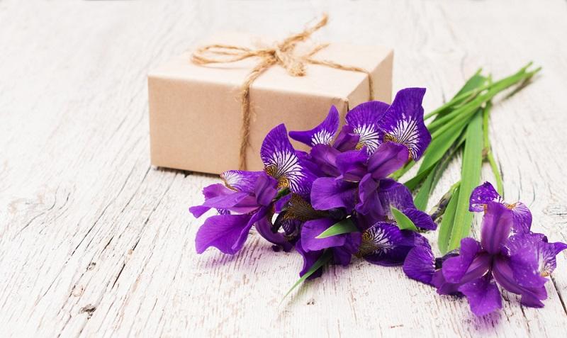 Die Iris oder Schwertlilie ist eine alte Gartenpflanze, die man schon vor Christi Geburt in Asien kultivierte.