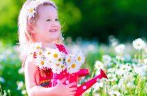 Margeriten: Pflanzen, pflegen & überwintern