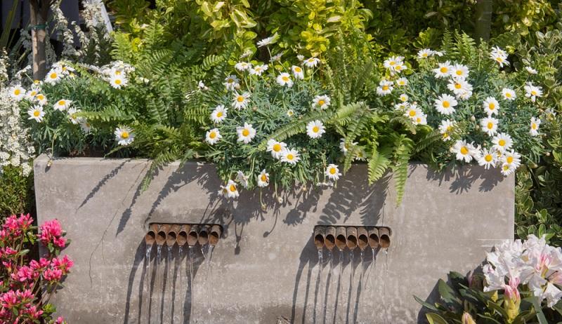 Die ideale Pflanzzeit für diese Sommerblumen ist das Frühjahr.