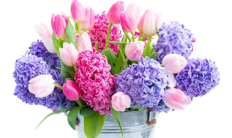 Die duftenden Frühlingboten waren schon in der Antike beliebt und von dort stammt auch ihr Name.