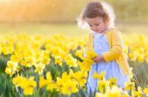 Osterglocken: Pflanzen, pflegen, schneiden & düngen