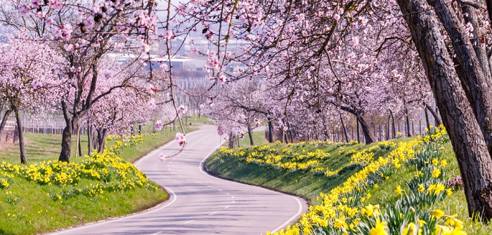 Im Christentum steht die Osterglocke aufgrund ihrer Blütezeit um Ostern herum für die Auferstehung und als Symbol für das ewige Leben.