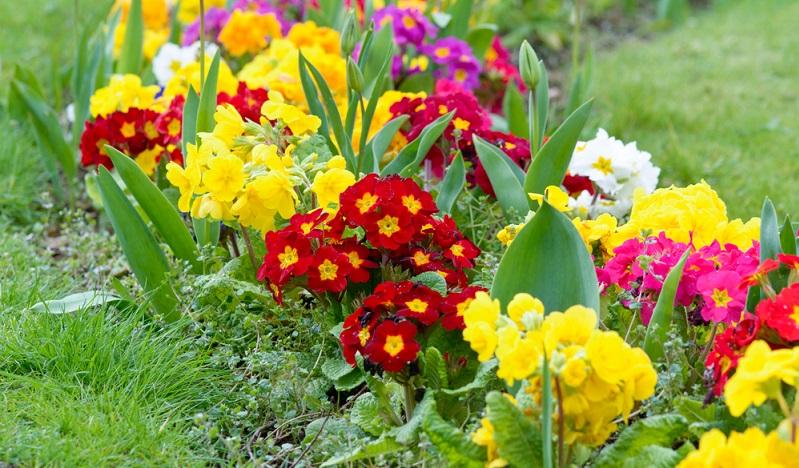 Die Erde sollte stets leicht feucht sein, deshalb muss bei längerer Trockenheit gegossen werden. Auch bei Neupflanzungen ist regelmäßiges Gießen wichtig.