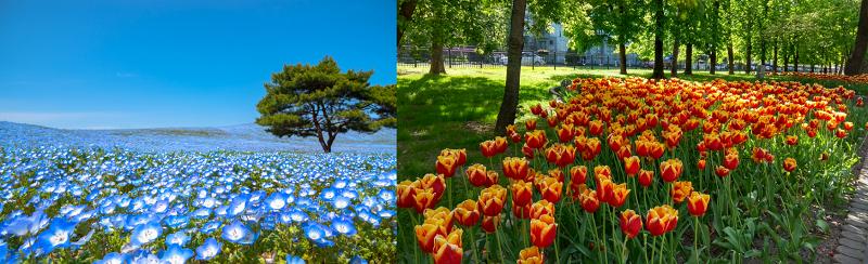 Blaue und weiße Blüten vermitteln Weite, während gelbe, rote und orangefarbene warm wirken und Tiefe schaffen. (Gartengestaltung Bilder #02)