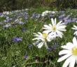 Bauerngarten anlegen: Ideen & Beispiele