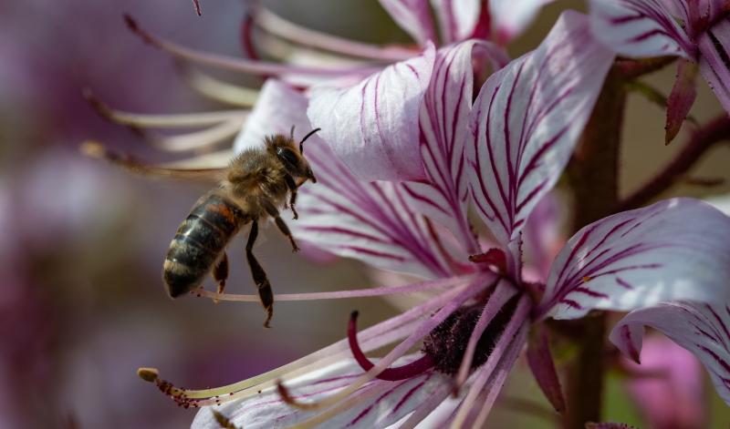 Bauerngarten anlegen und Bienen retten.