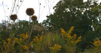 Bauerngarten gestalten: Tipps vom Profi