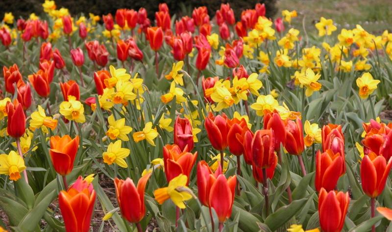 Bei jeder Gartengestaltung sollten auch Ideen für den Vorgarten mit einbezogen werden.