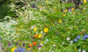 Den Garten selbst gestalten: Mit der pflegeleichten Nachtkerze gar kein Problem.