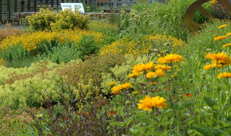 Ratschläge vom Gartenexperten: Garten selbst gestalten.