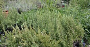 Balkonkästen bepflanzen: Tipps & Infos für die Balkonbepflanzung