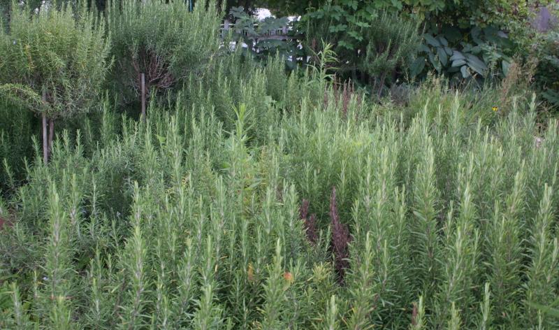 Balkonkästen bepflanzen: So gelingt das Anpflanzen