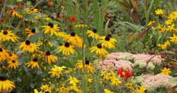 Garten anlegen: Ideen vom Experten
