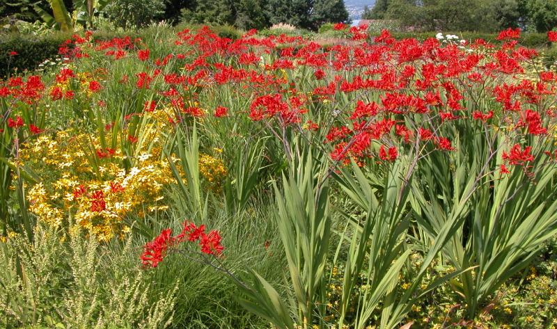 Garten anlegen: Ideen vom Experten: Gartenplanung und Gestaltungstipps umsetzen
