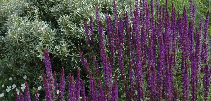 Garten anlegen: Pflegeleichter Garten mit den richtigen Pflanzen