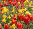 Garten: Moderne Gartengestaltung von kreativ bis schlicht