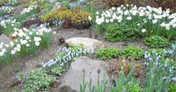 Garten planen: Mit Expertentipps zum Erfolg!