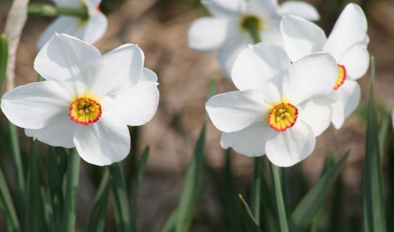 Garten planen: Was muss ich bei der Planung meines Gartens beachten? Hilfreiche Tipps und Tricks von den Experten