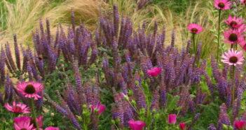 Gartengestaltung: Kleine Gärten stilvoll gestalten