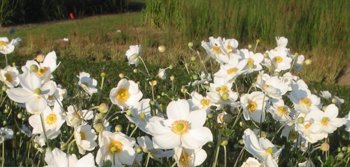 Kleine Gärten gestalten: Schritt für Schritt