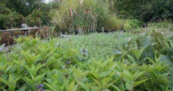 Kräutergarten Balkon: Tipps für die Balkonbepflanzung