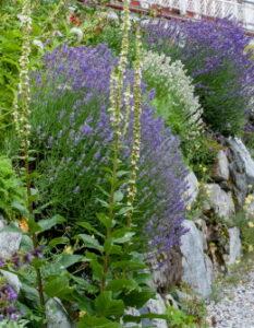 Landhausgarten: Tipps für idyllische Gärten