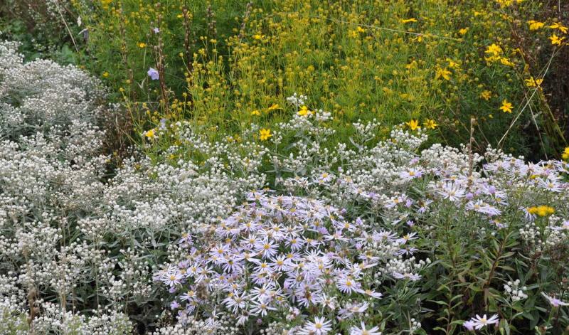 Stauden pflanzen: Tipps vom Profi: Was ist bei der Pflanzung zu beachten?