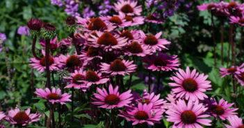 Vorgarten gestalten: Ideen für den Traumgarten