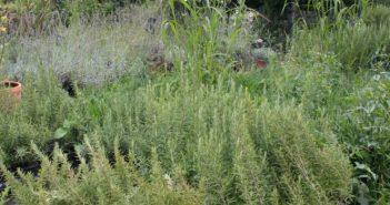Balkon bepflanzen: Tipps vom Profi