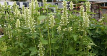 Blumenkästen bepflanzen: Tipps vom Fachmann