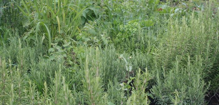 Blumenkästen bepflanzen: Tipps vom Fachmann für die Farbwahl