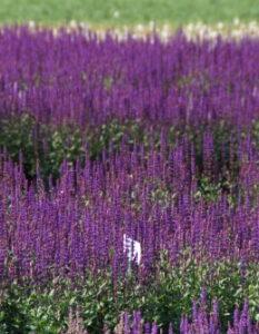 Blumenkasten bepflanzen: Kreative Pflanzideen