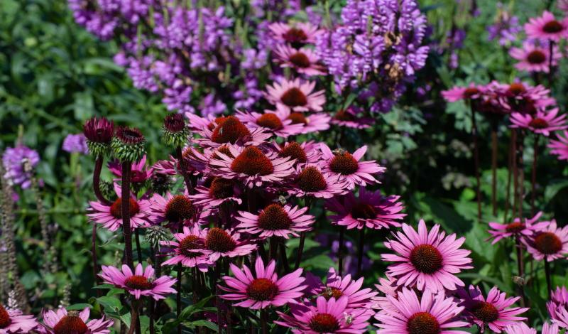 Blumenkasten bepflanzen: Kreative Pflanzideen geschickt umsetzen