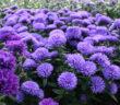 Gartenideen: Bilder, die inspirieren