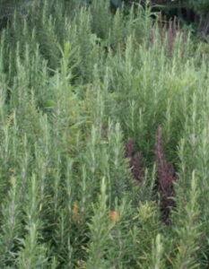 Kräutergarten: Tipps vom Fachmann